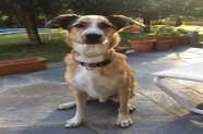 Petit és un gos en adopció de Veu Animal | Santa Coloma de Gramenet | Barcelona