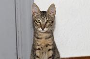 Tyron, en adopció a Santa Coloma de Gramenet - Barcelona