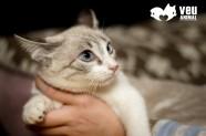gateta Julien, adoptada
