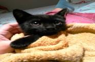 gatito negro rescatado de un parking