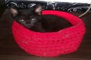 la gata Aduba ya ha sido adoptada